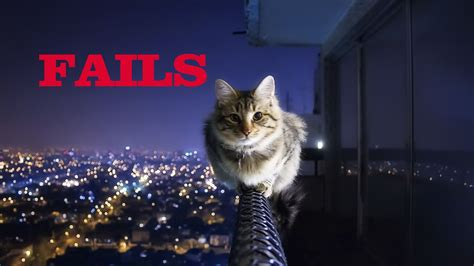 Try Not To Laugh  Epic Funny Cat Fails Makemelaughscom
