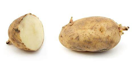 pomme de terre wikimini l encyclop 233 die pour enfants