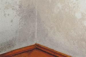 Schimmel Hinter Tapete : ihr maler krause ~ Orissabook.com Haus und Dekorationen