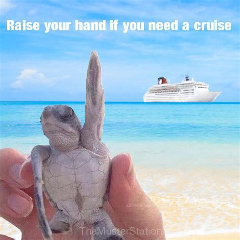Cruise Meme - 27 best wish i was there images on pinterest beautiful places places to visit and dreams