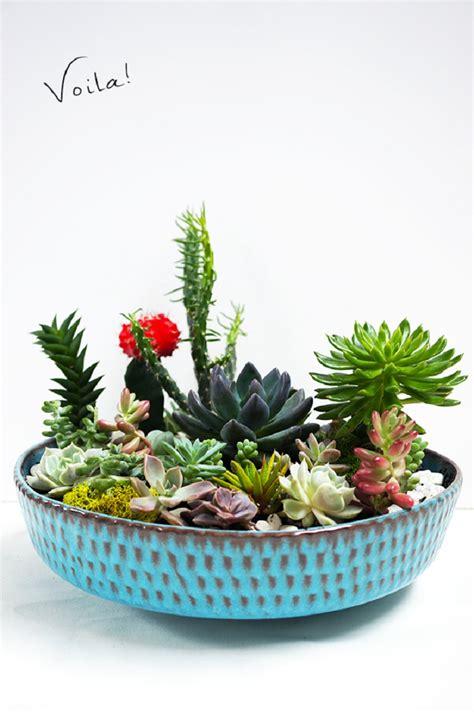 top  fun diy projects  succulent plants