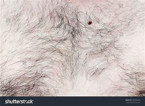 Hairy Chest And Stomach The Guy Stock Photo 340783439