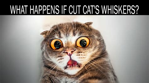 can you cut a cats nails