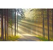 Nature Wood Trees Forest Leaves Road Grass Sun Rays