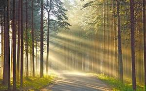 Nature, Wood, Trees, Forest, Leaves, Road, Grass, Sun, Rays, Branch, Shadow, Wallpapers, Hd