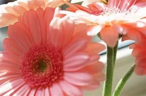 Wann Schneidet Man Rosen Zurück : pinolino blog blumen machen gl cklich erst recht zum muttertag ~ Orissabook.com Haus und Dekorationen