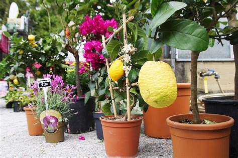 Botanischer Garten Graz Veranstaltungen by 12 Grazer Pflanzen Rarit 228 Tenmarkt Im Botanischen Garten
