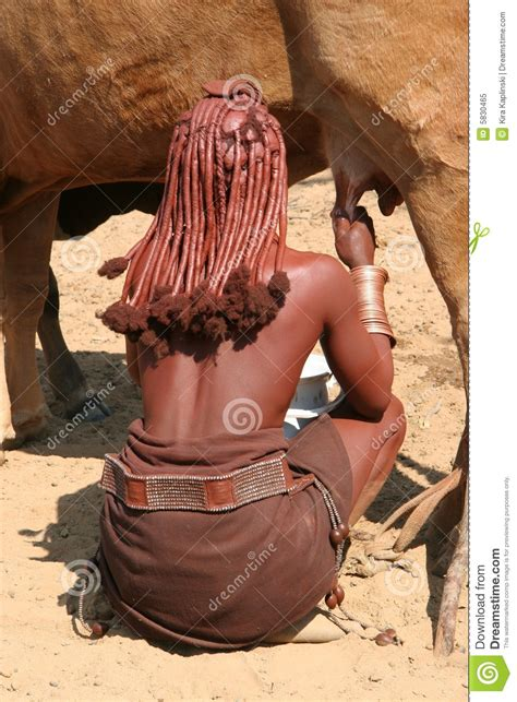 himba woman  milking   royalty  stock photo