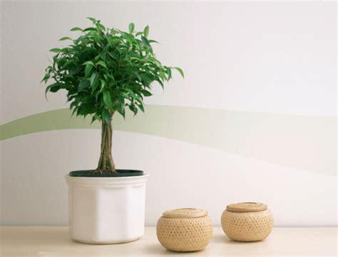quelle plante pour une chambre la plante verte d 39 intérieur archzine fr