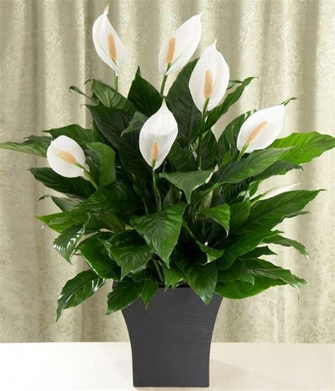 Plantes Vertes D'intérieur  40 Propositions Pour Changer