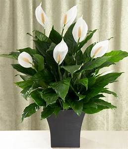 plantes vertes d39interieur 40 propositions pour changer With plante verte d interieur photo