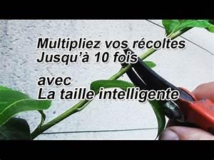 Tailler Un Citronnier : multipliez vos r coltes de 2 10 fois avec la taille vert ~ Melissatoandfro.com Idées de Décoration