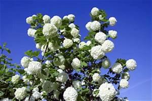 Winterharte Kübelpflanzen Schattig : winterharte pflanzen f r balkon und garten ~ Michelbontemps.com Haus und Dekorationen