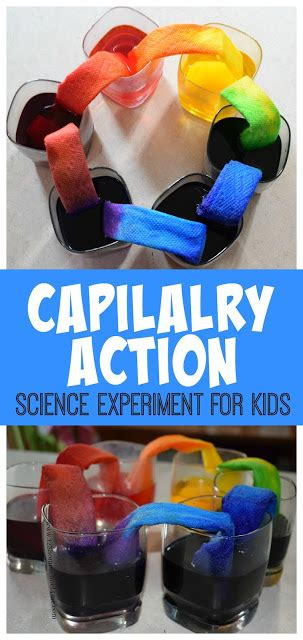 capillary action science experiment
