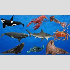 Learn Real Sea Animals For Kids Learn Animals Name In English Ocean Creatures Youtube