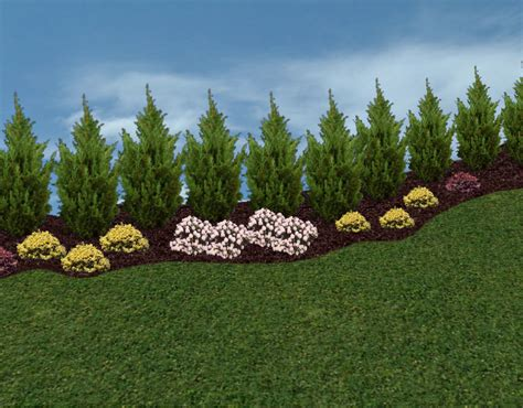 landscaping trees ideas privacy landscaping trees privacy trees and hedges in the landscape landscape pinterest
