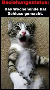 Bilder Schönes Wochenende Lustig : oh je schon cooler spass tolle bilder oder leider wahr katzen katzen bilder und ~ Frokenaadalensverden.com Haus und Dekorationen