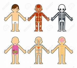 Human Body Diagram Clipart (62+)