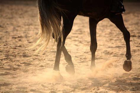 sehnenerkrankung beim pferd homoeopathisch behandeln
