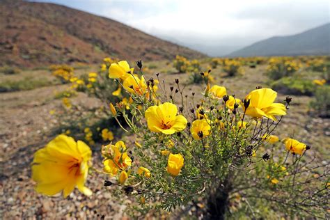See The Worlds Driest Desert Covered In Wildflowers