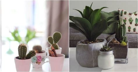 Indoor Plants That Will Absorb All The Negative Energy