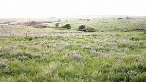 Temperate And Tropical Grasslands Savannas And