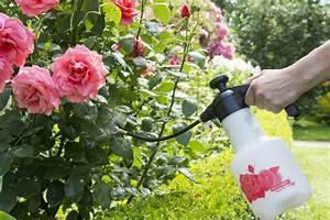 Mehltau An Gurken : pflanzenkrankheiten vorbeugen und bek mpfen birchmeier spr htechnik ag ~ Frokenaadalensverden.com Haus und Dekorationen