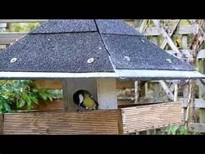 Graines Oiseaux Du Ciel : mangeoire et nourrissage des oiseaux du ciel en ville youtube ~ Melissatoandfro.com Idées de Décoration