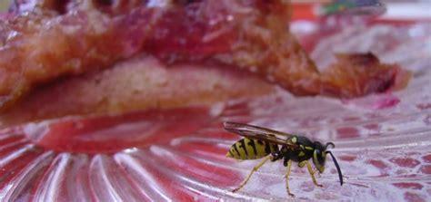 was machen wespen was machen wenn die wespen anschwirren
