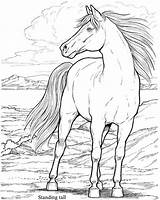Coloring Horse Paint Horses Adult Printable Draw Herd Wild Dover Drawing Adults Thank Grandson Would Realistic Colouring Him Sheets Getdrawings sketch template