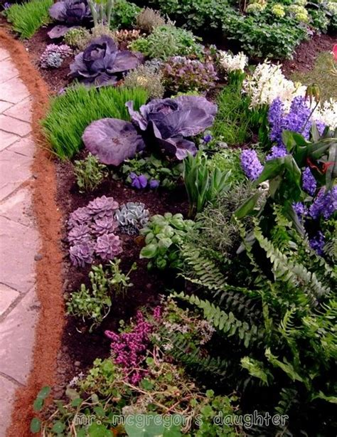 edible ornamental plants 17 best images about garden decor on pinterest gardens cabbages and flower
