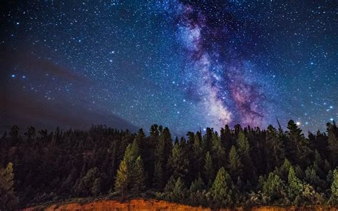 Milky Way Over The Forest Wallpaper Background Image