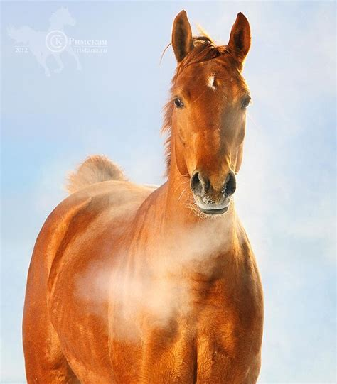 horse russian breeds cold weather horses