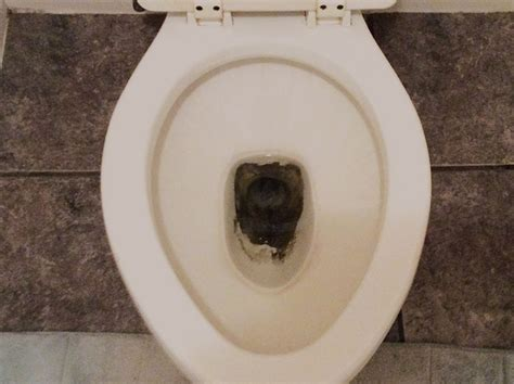 how to clean stained toilet bowl how to remove stains from the toilet bowl 101cleaningtips net remove stains toilet bowl and