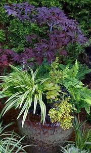 les 25 meilleures idees de la categorie erable japonais With idee deco terrasse jardin 16 fusain du japon plantation taille et entretien