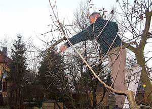 Bäume Beschneiden Jahreszeit : obstb ume im winter beschneiden ~ Yasmunasinghe.com Haus und Dekorationen