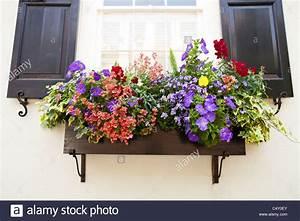 Blumen In Der Box : window flower box stockfotos window flower box bilder alamy ~ Orissabook.com Haus und Dekorationen