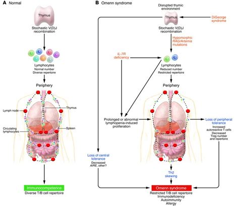Serre Yu Wong by Jci Murine Models Of Omenn Syndrome