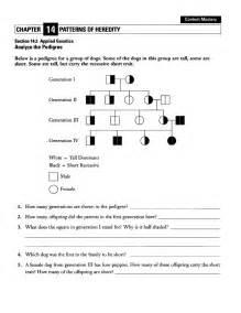 Punnett Square Practice Worksheet With Answers Genetic Pedigree Worksheet Davezan