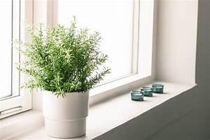 Pflanzen Die Nicht Viel Licht Brauchen : wie viel licht brauchen unsere zimmerpflanzen ~ Markanthonyermac.com Haus und Dekorationen