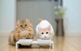 cat milk cats drink milk wallpaper high definition high quality