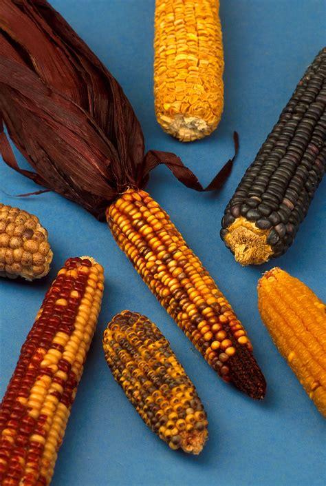 mais cuisine maize wiktionary