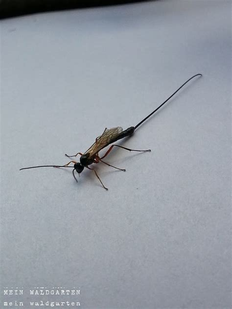 Was Tun Gegen Stechmücken by Schnaken In Der Wohnung Ostseesuche