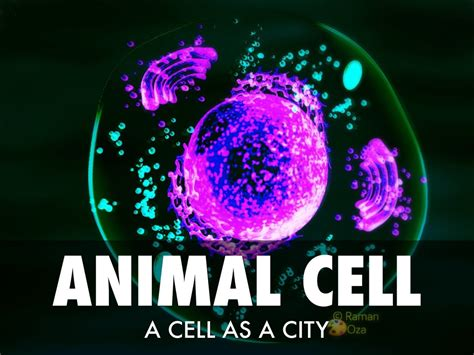 Animal Cell Wallpaper - animal cell as a city by grace mathews