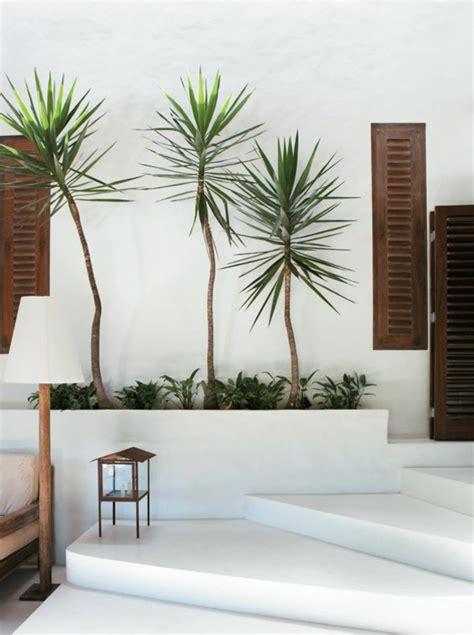 Palmen Für Innen by Yucca Palme 26 Fantastische Bilder Zur Inspiration