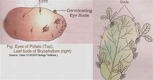 Cbse Class Xii  Reproduction In Organisms