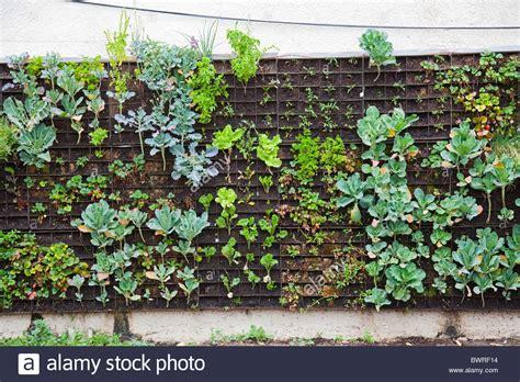Edible Vertical Garden by The Edible Garden Wall Vertical Garden Created By
