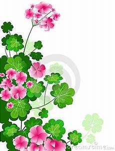 Gallery For > Pink Geranium Clipart