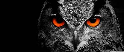 Owl Ultrawide Desktop Eye 3440 1440 Wallpapers