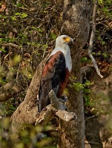 - Wildlife Photography Africa